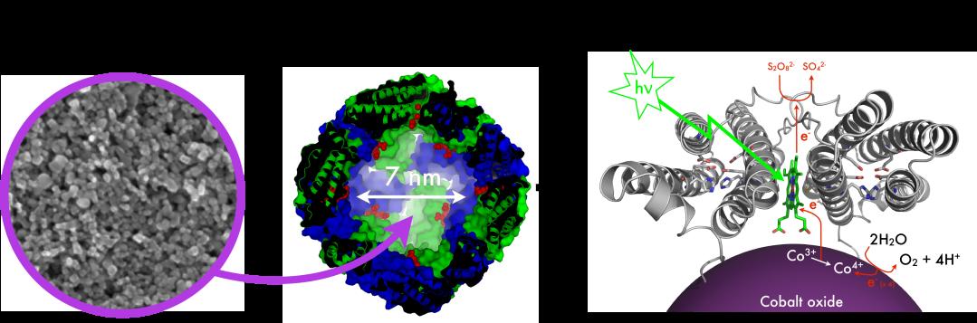 PhotocatalyticNP